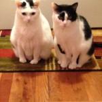 cats in door