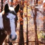 fall horse 4