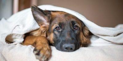 Lovely dog  in home.