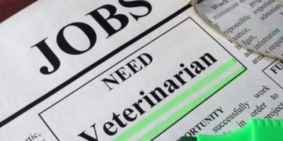 Newspaper with ads for vacancy Veterinarian. Employment concept.